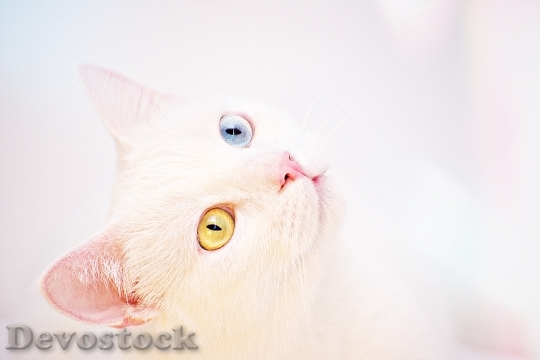 Devostock Blue Animal Pet Rare Cat 4K