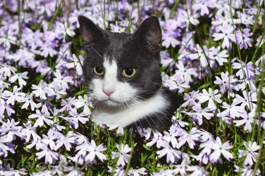 Devostock CAT FLOWER GARDEN