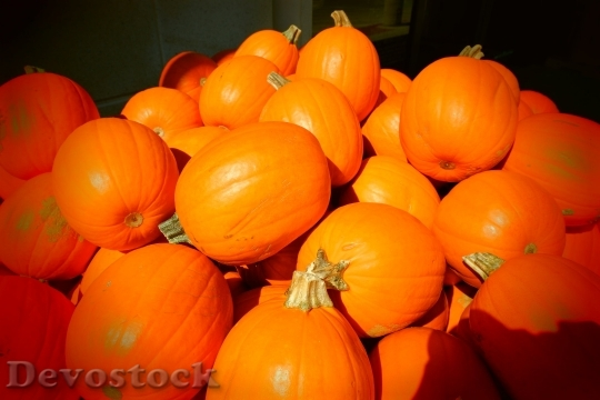 Devostock Pumpkins Fall Orange Autumn 660547 4K.jpeg