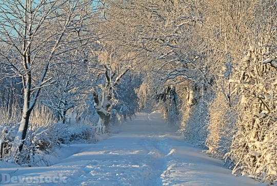 Devostock Winter Wintry SnowSnow 4K