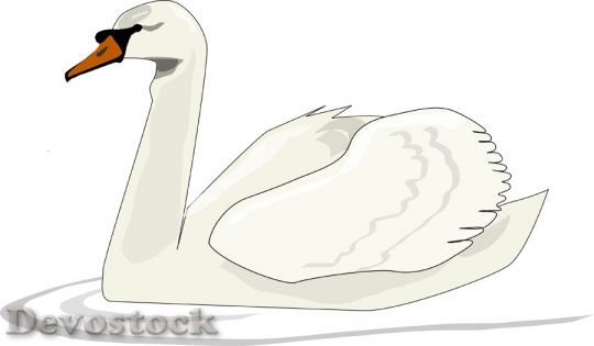 Devostock Animal Swan Swimming