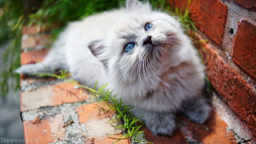 Devostock Cats Outdoor Glance Kittens Animal 4k