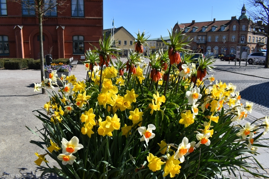 Devostock Exclusive Sweden Nature Skane Simrishamn Spring Colorful Many Flowers Old Square 4k