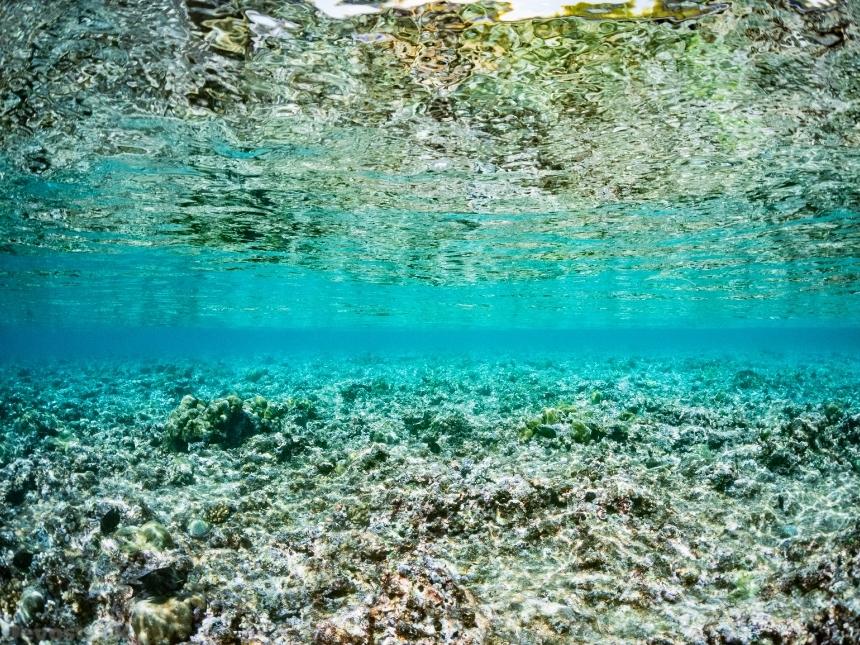 Devostock Nature Underwater Water Clear Transparent Sea 4k Devostock Download Free Images Public Domain Photos And More