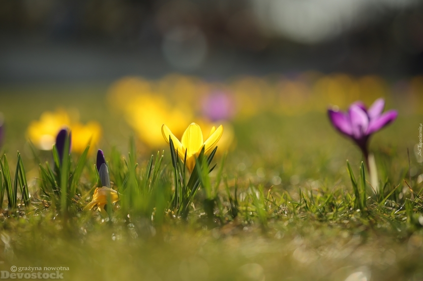 Devostock Stunning Nature Spring Grass Colorful Flowers 4k