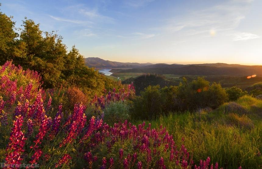 Devostock Usa Parks Antirrhinum Yosemite Shrubs Grass Nature