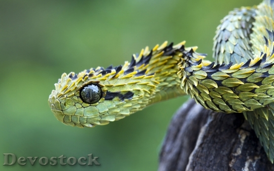 Devostock Dangerous colored snake  (18)