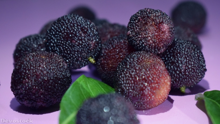 Sweet and sour fruit bayberry  (15)